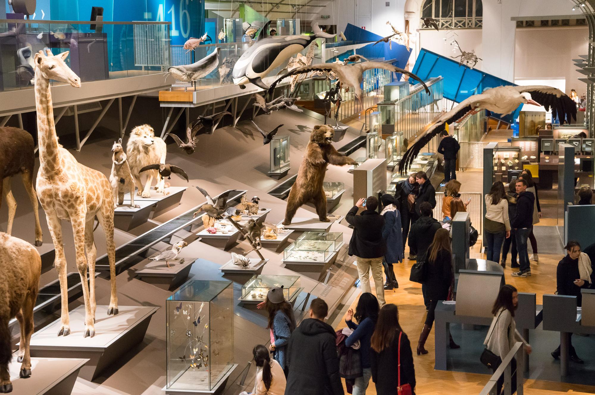 Museum voor Natuurwetenschappen - Koninklijk Belgisch Instituut voor  Natuurwetenschappen - Brussels Museums